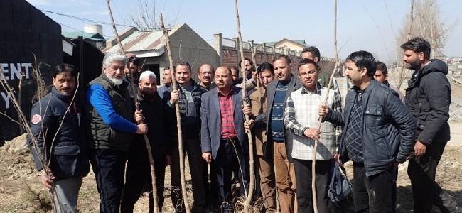 ULB Deptt Kashmir organizes mulberry plantation drive