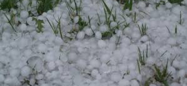 Hail storm Damages Orchards in North Kashmir's Tangmarg area.The hail strom continued for more than half hour.