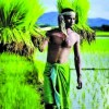 Cabinet hikes minimum support price of paddy by Rs 200 per quintal