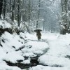 Weatherman forecasts rain, snow as WD approaches Kashmir