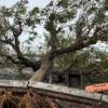 Over 160 dead as cyclone 'Idai' strikes Zimbabwe, Mozambique
